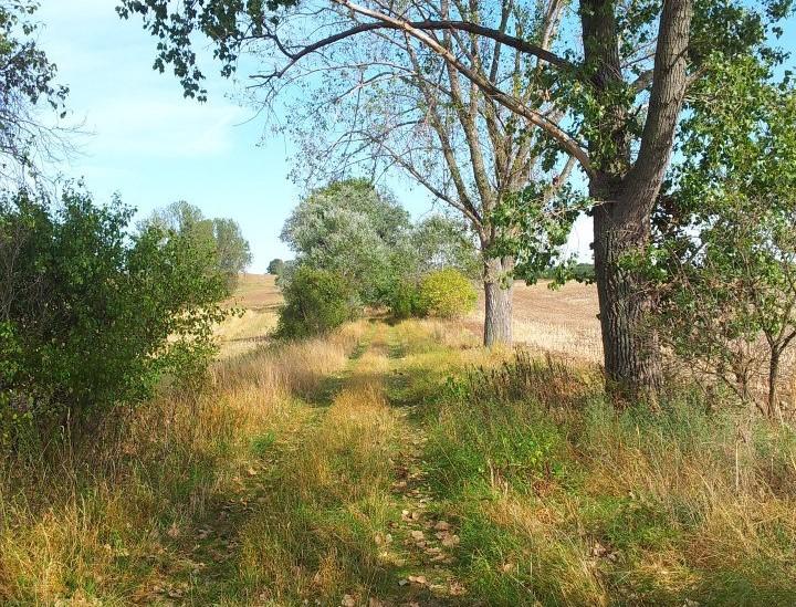 Alte Landwege verschwinden: AfD auf einmal grün?