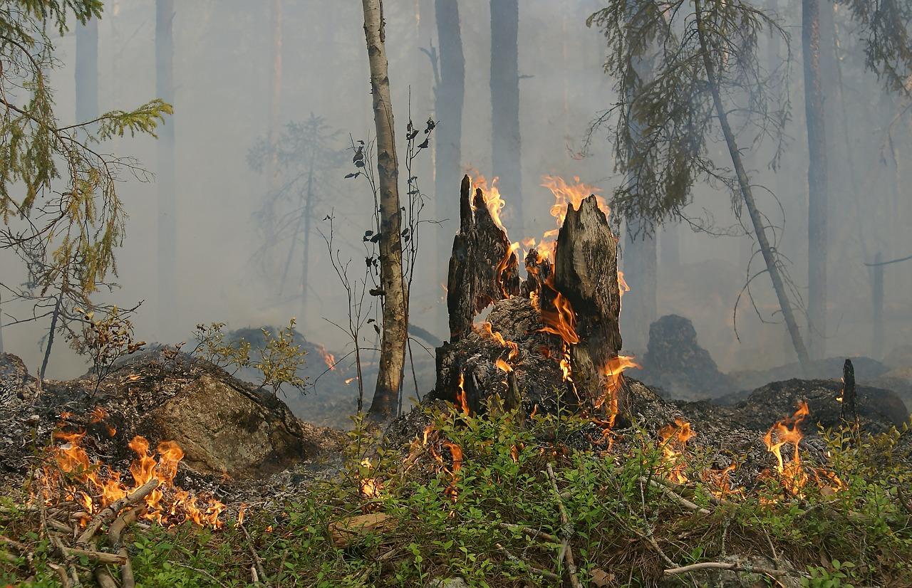 Waldbrand auf Usedom: Munitionsbelastung ist hoch