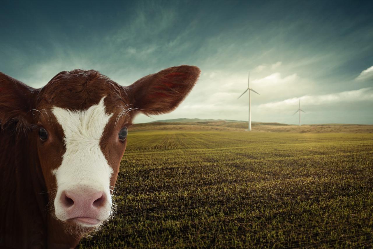 Aktuelle Stunde im Landtag: Zukunft des Klimaschutzes in M-V