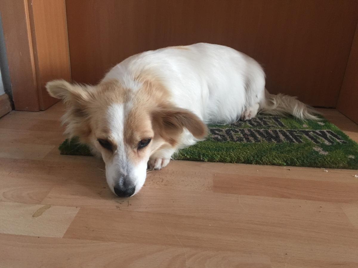 Wismar: Hund vermisst!