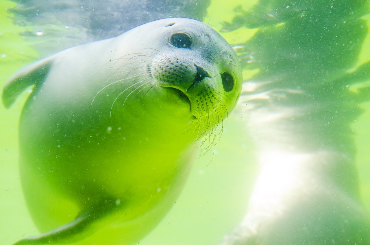 Rostocker Zoo bekommt neues Robbenareal