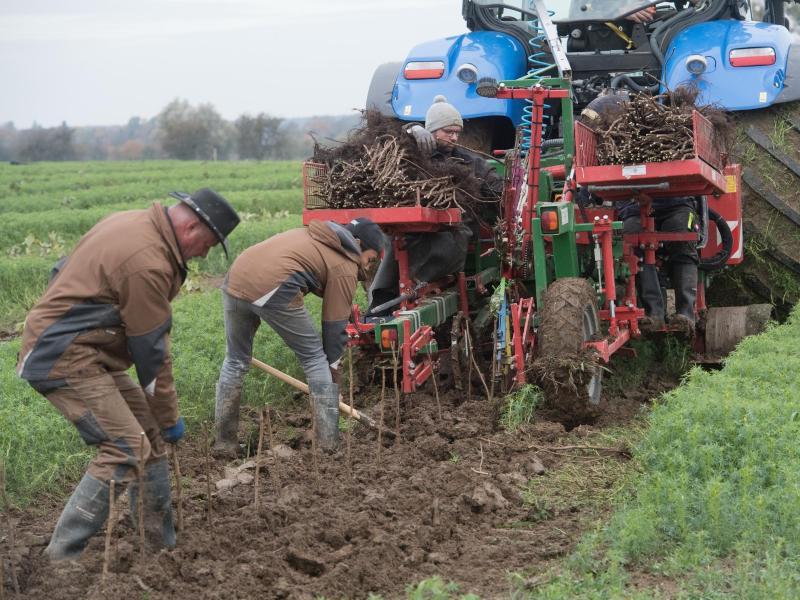 Obstverarbeiter auf Usedom legt neue Plantagen an
