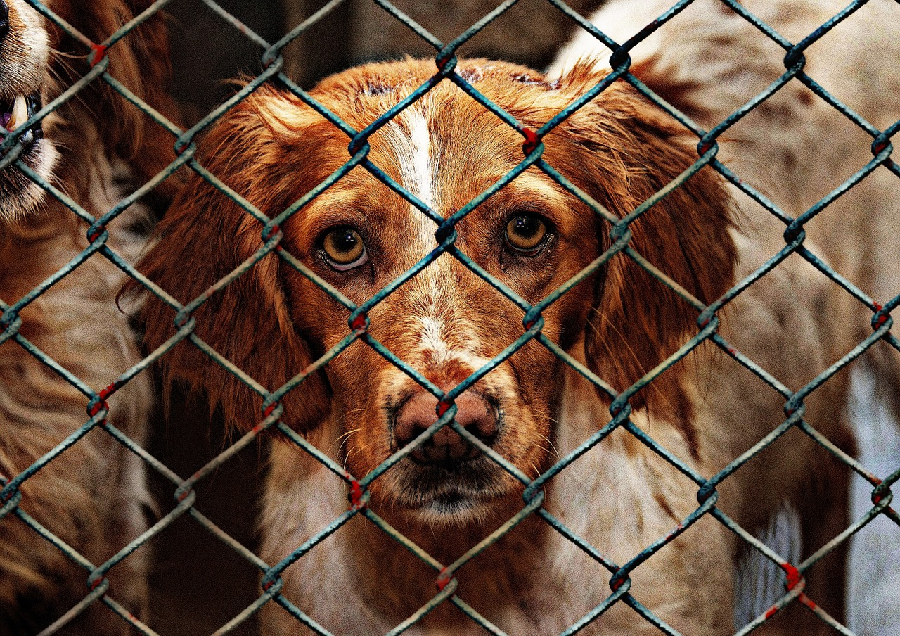 Tierschützer: Hunde viel länger in Heimen