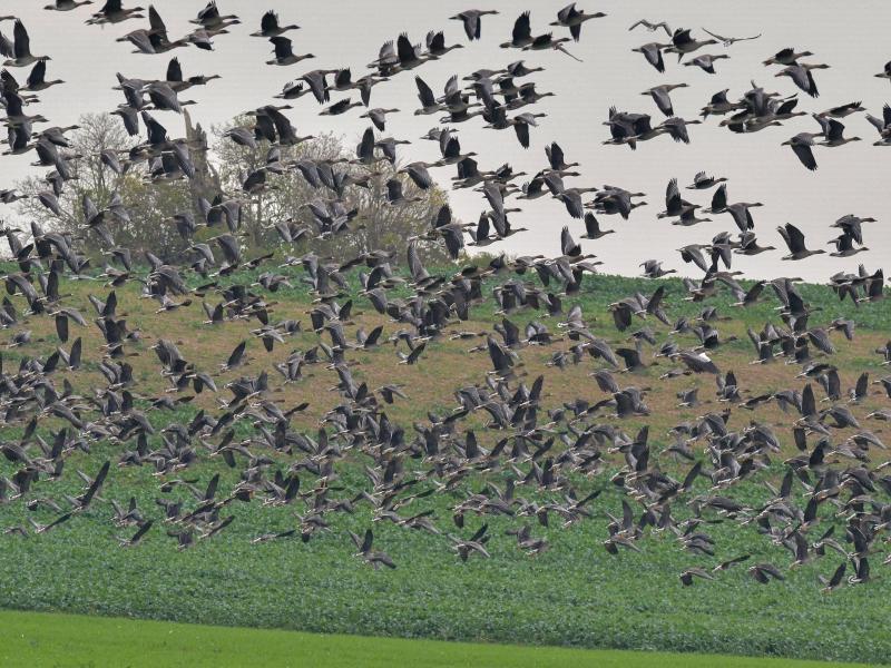 Nach Vogelgrippe-Fall muss Hausgeflügel regional in Ställe