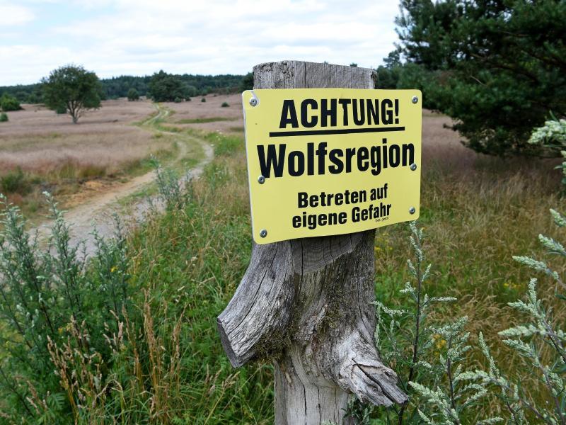 2020 doppelt so viele Wolfsattacken auf Nutztiere