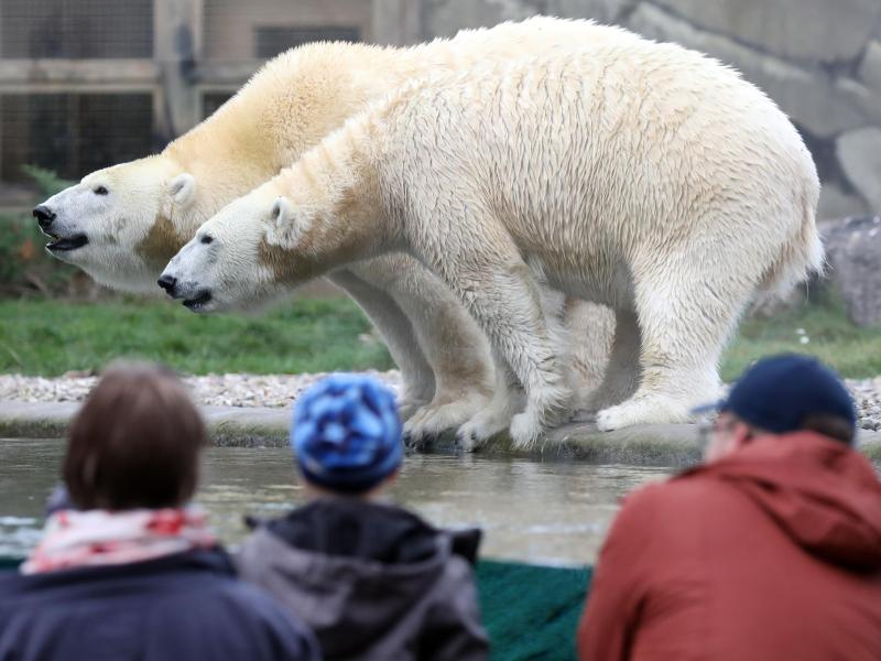 Verband: Zoos sollten spätestens ab 7. März öffnen