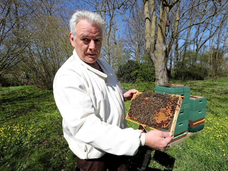 Bienen sind gut durch den Winter gekommen
