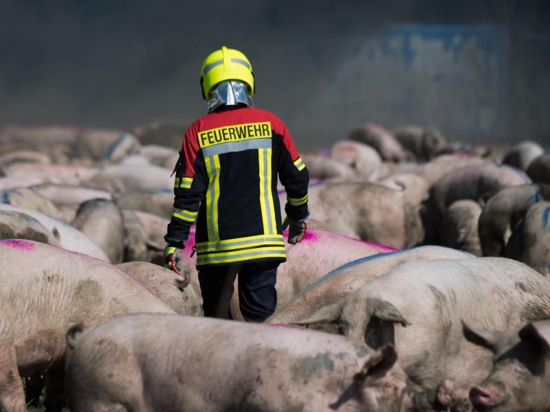 Bürgermeister von Alt Tellin fordert Tierwohl-Anlage