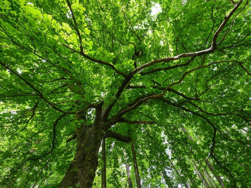Warum haben Bäume Narben? Naturpark stellt Harzer-Beruf vor
