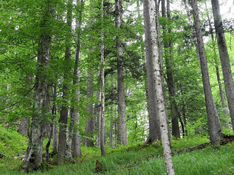 270 Millionen Euro Zuschuss für MV-Wald in zehn Jahren